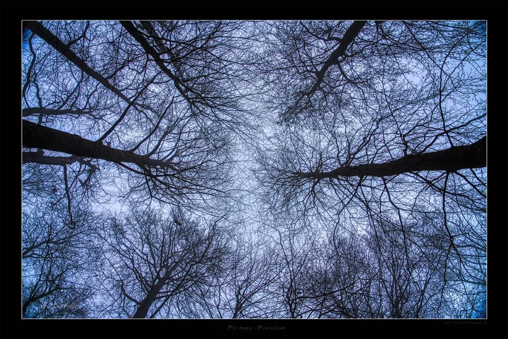 Baum Stern