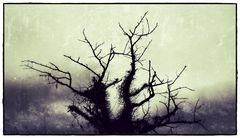 Baum surreal