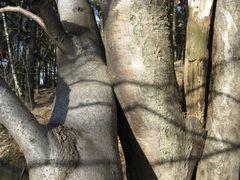 Baum - Tantra