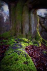 Baum-Traum 1