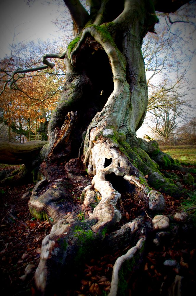 Baum- Traum 2