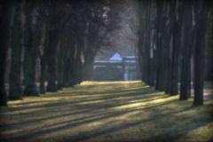 Baum- Traum 3