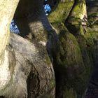 Baum- Traum 4