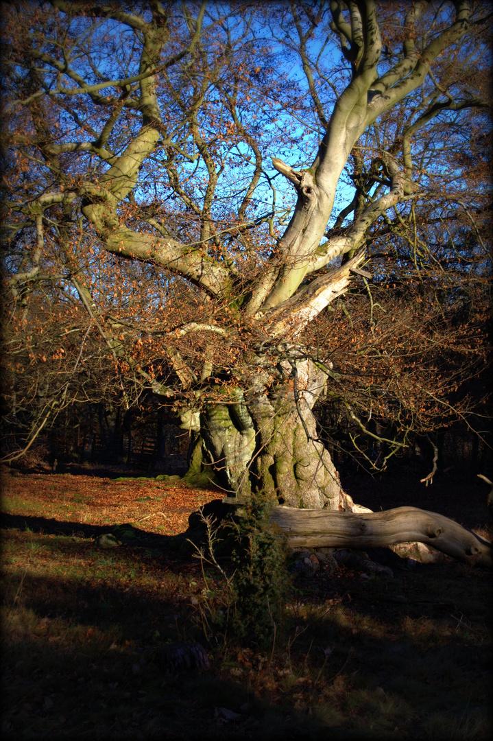 Baum- Traum 6