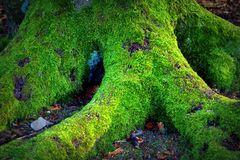 Baum- Traum 7