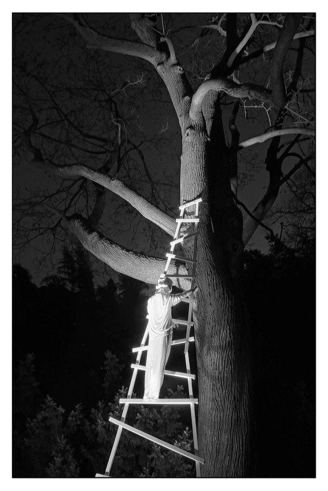 Baum Traum