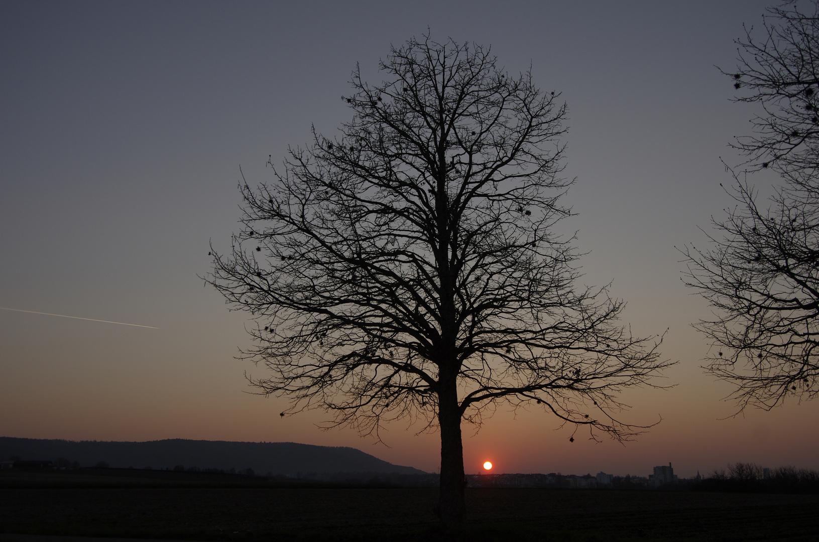 Baum-Traum