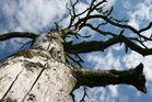 Baum über dem Mälaren