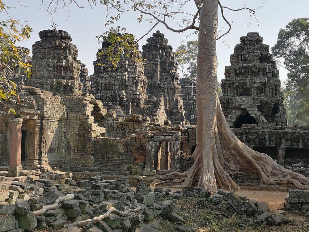 Baum umklammert Tempel Angkor Camb P20-20-col +1Foto Pagan