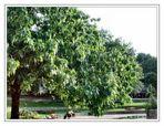 Baum Unbekannt..........