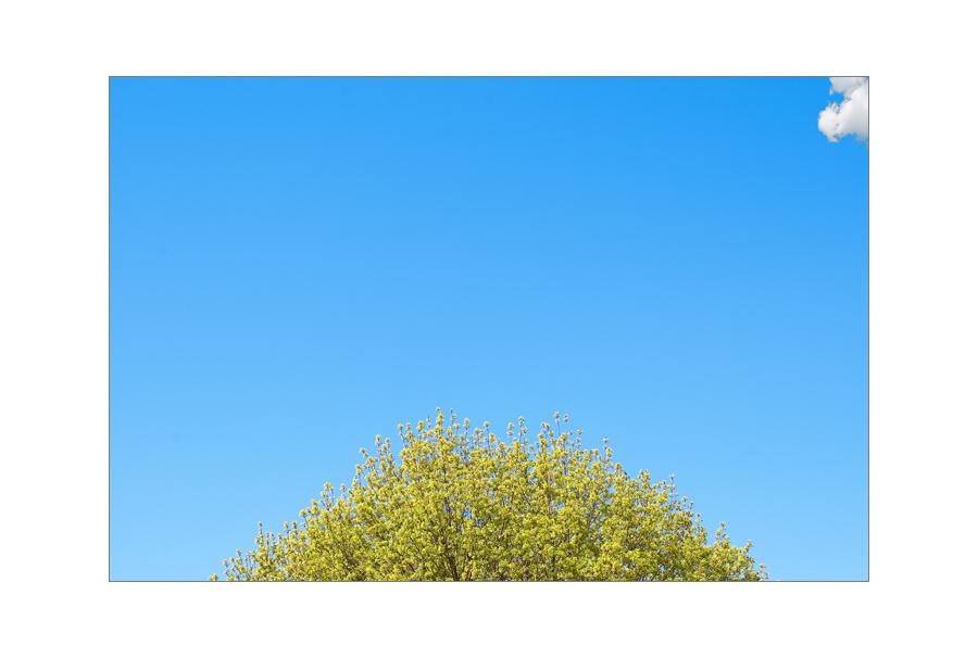 Baum und kleine Wolke
