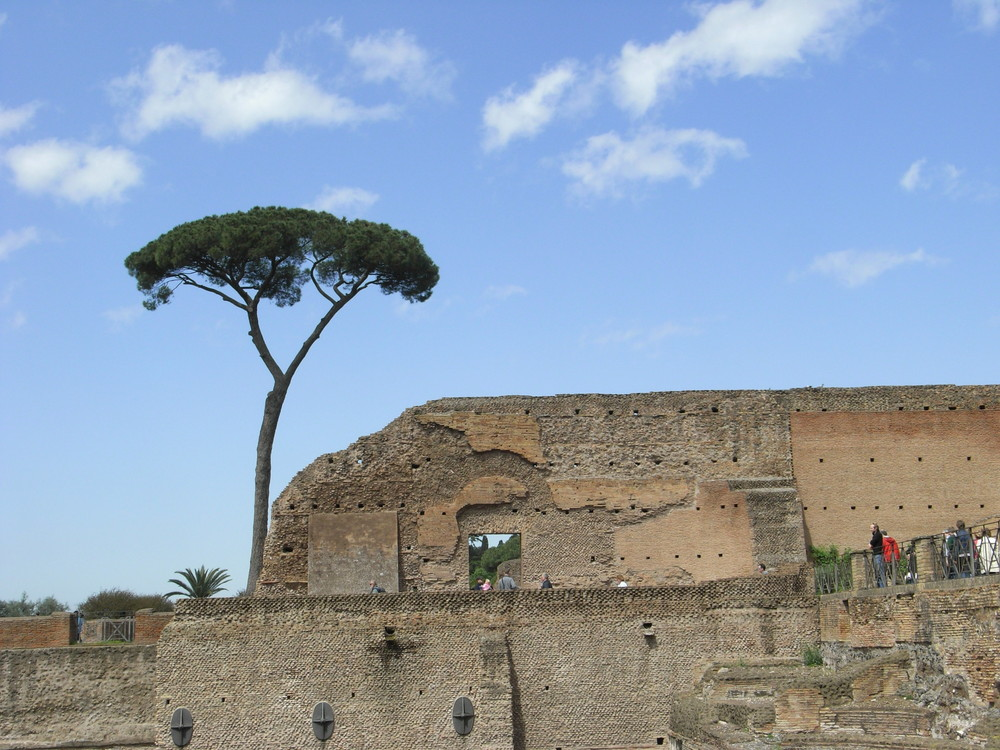 Baum und Mauer