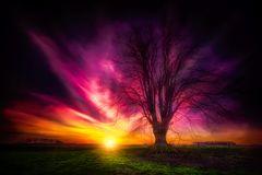 Baum und Sonne