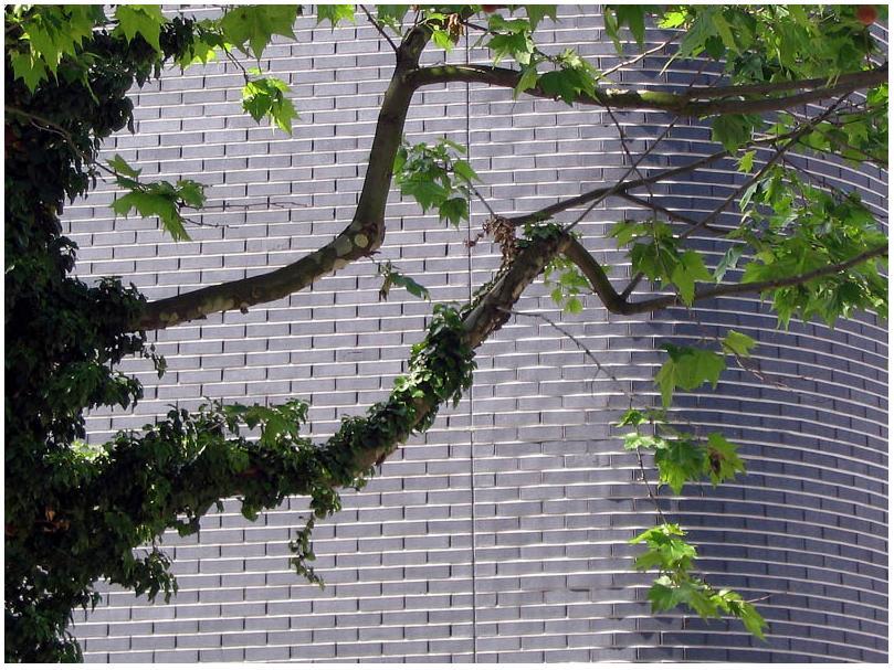 Baum und Wand