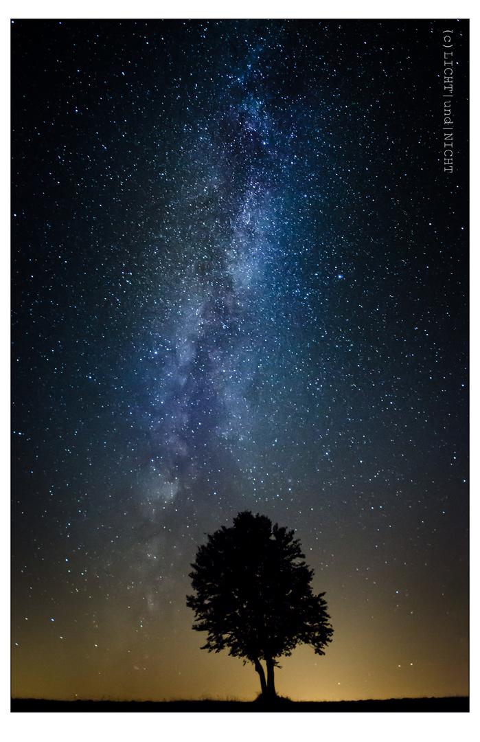 Baum   unter   Sternen