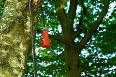 Baum unter Strom