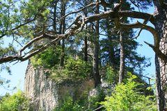 Baum-Verwirrung
