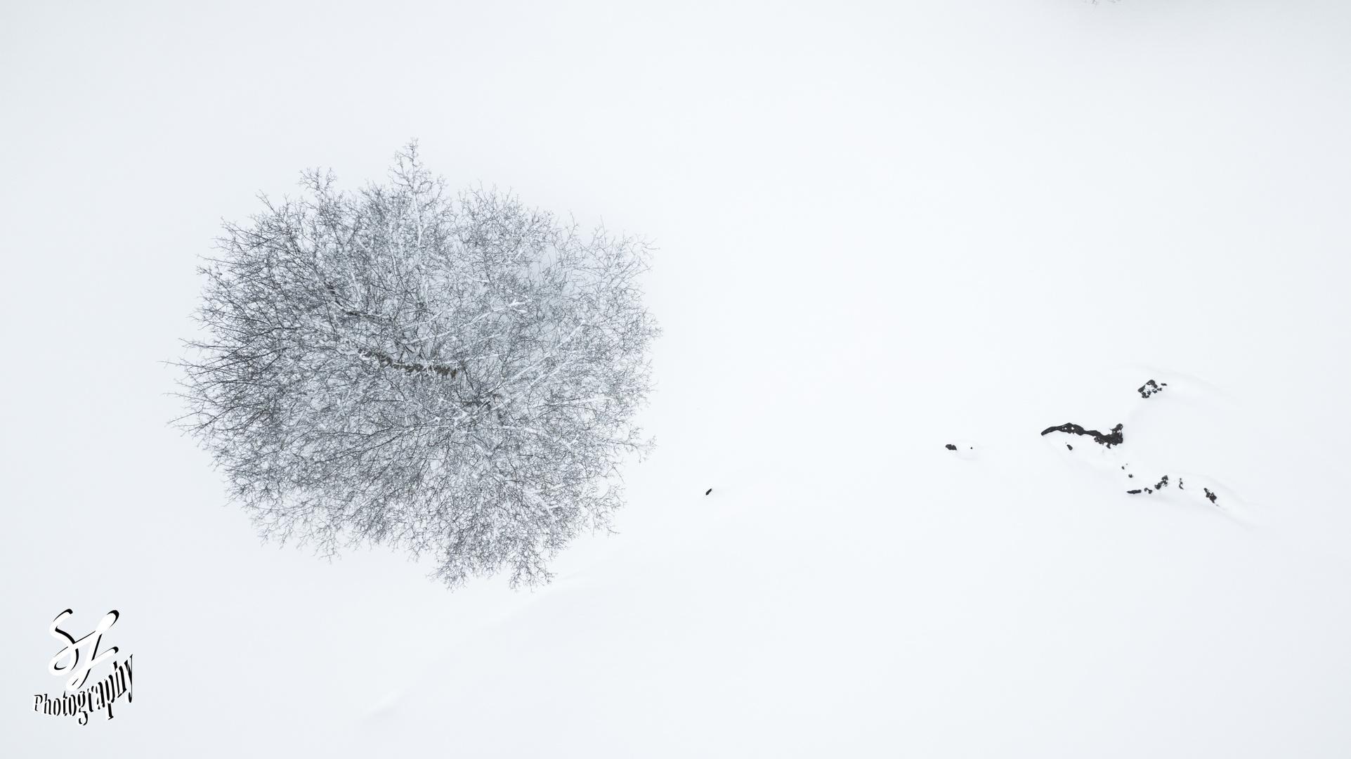baum von oben foto & bild   jahreszeiten, winter, wald bilder auf