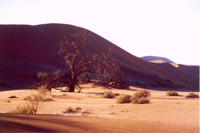 Baum vor Düne