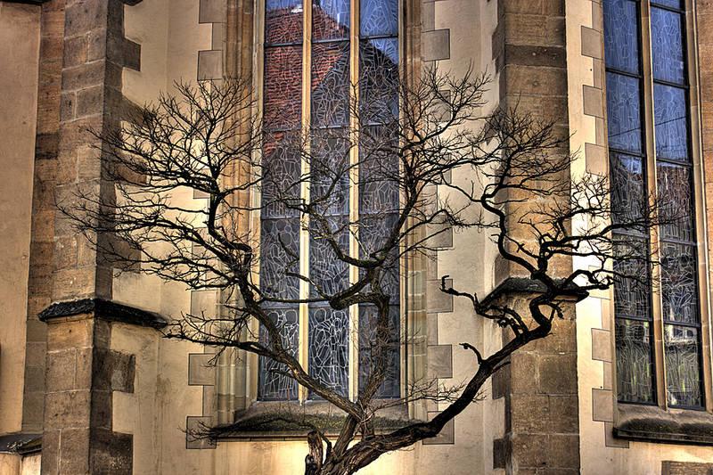 Baum vor einer Kirche