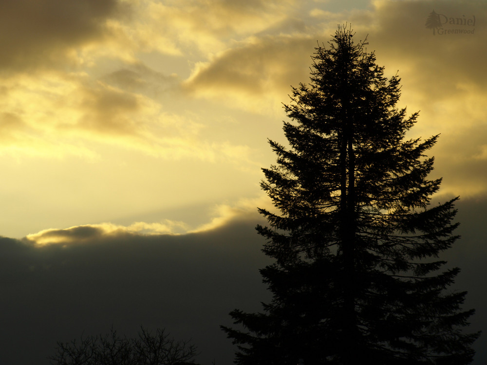 Baum vor meinem Fenster