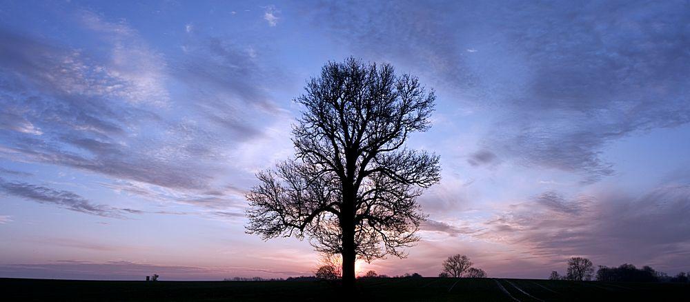 Baum vor Sonne