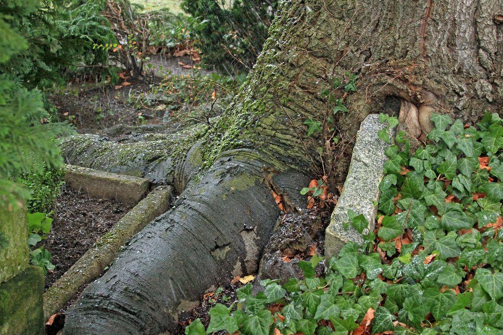 Baum vs. Beton und Stein