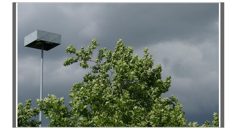 Baum, wartend auf den Sturm