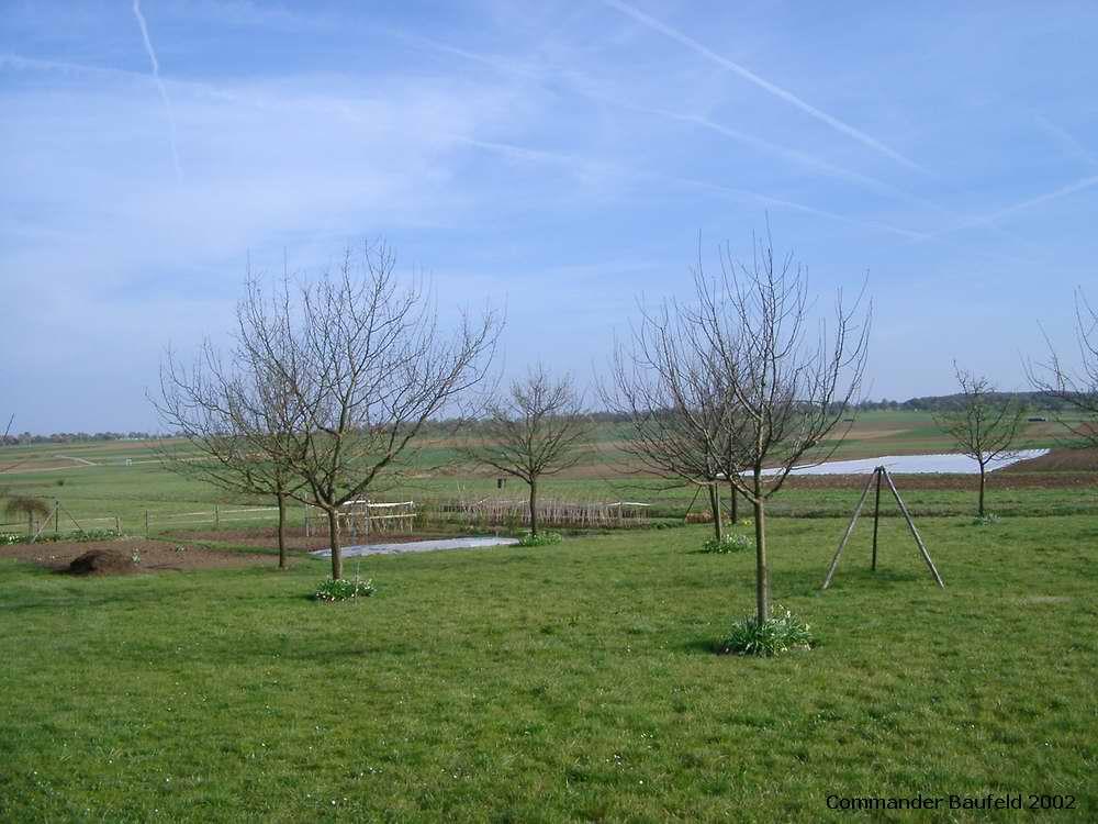 Baum-Wiese im Wandel der Jahreszeiten 3