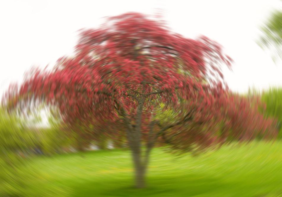 Baum-Wirbel