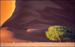 Baum-Wirbel-Linie