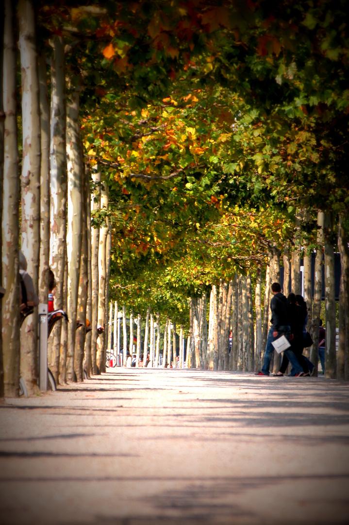 Baumallee auf der Rheinpromenade