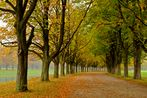 Baumallee im Herbst #2