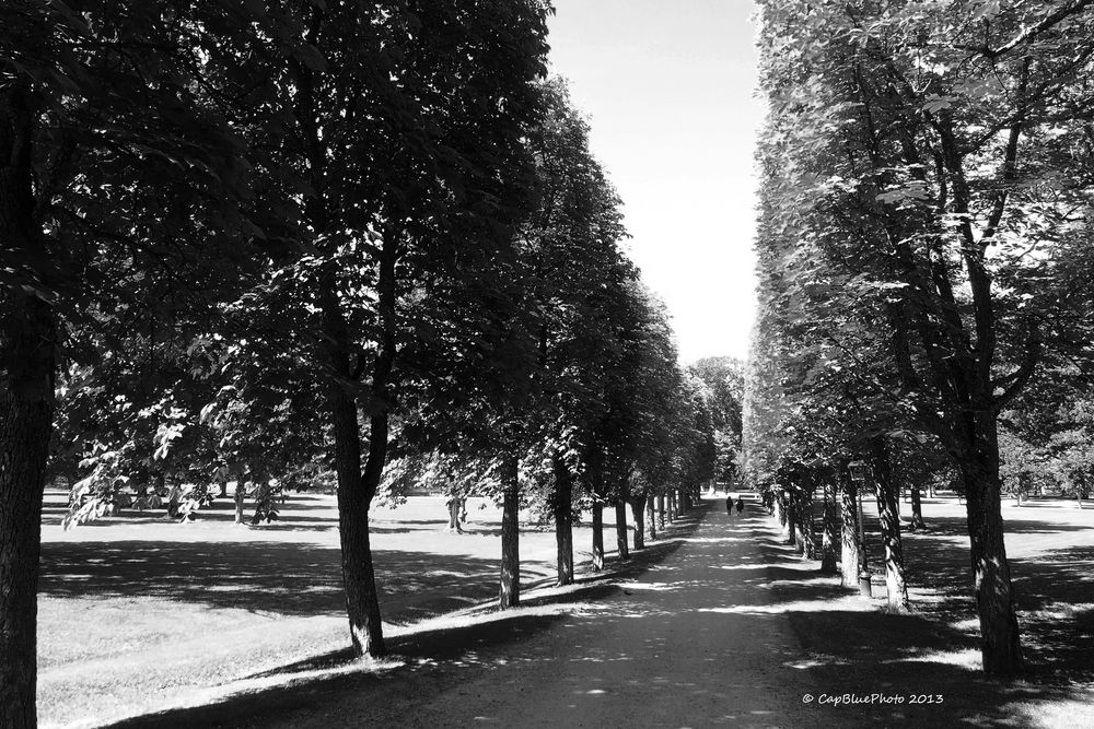 Baumallee in Schloß Drottningholm