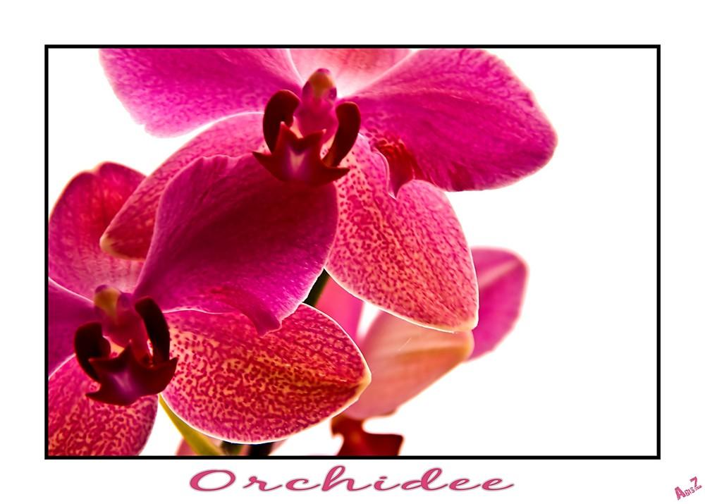 Baumarktorchidee Teil 2