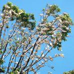 Baumbesetzer in Westaustralien
