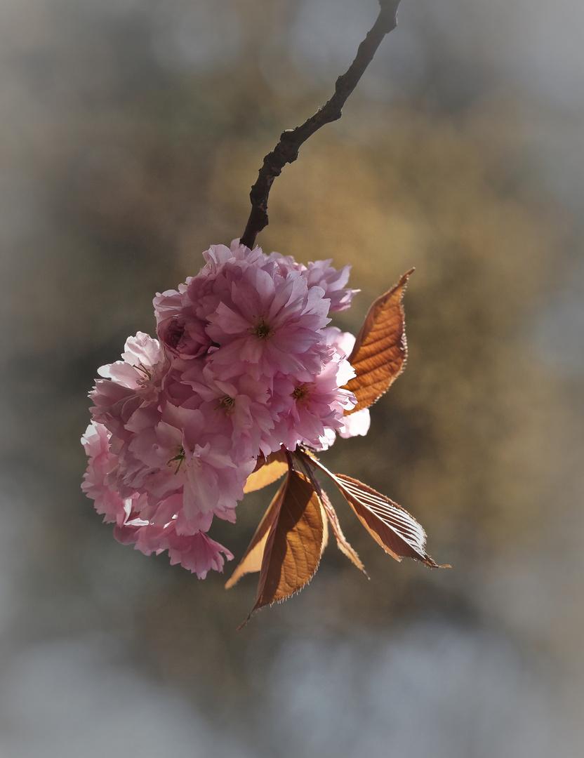 Baumblüte im späten Licht