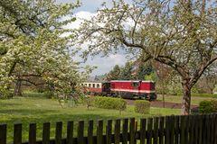 Baumblüte in Jonsdorf