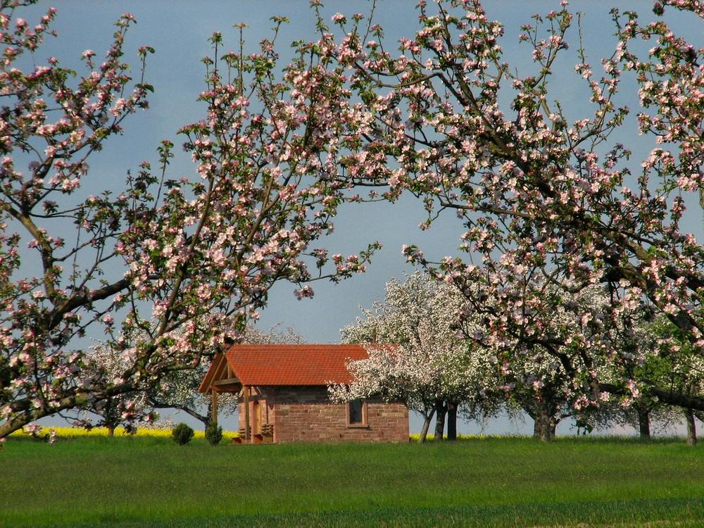 Baumblüte und Kapelle