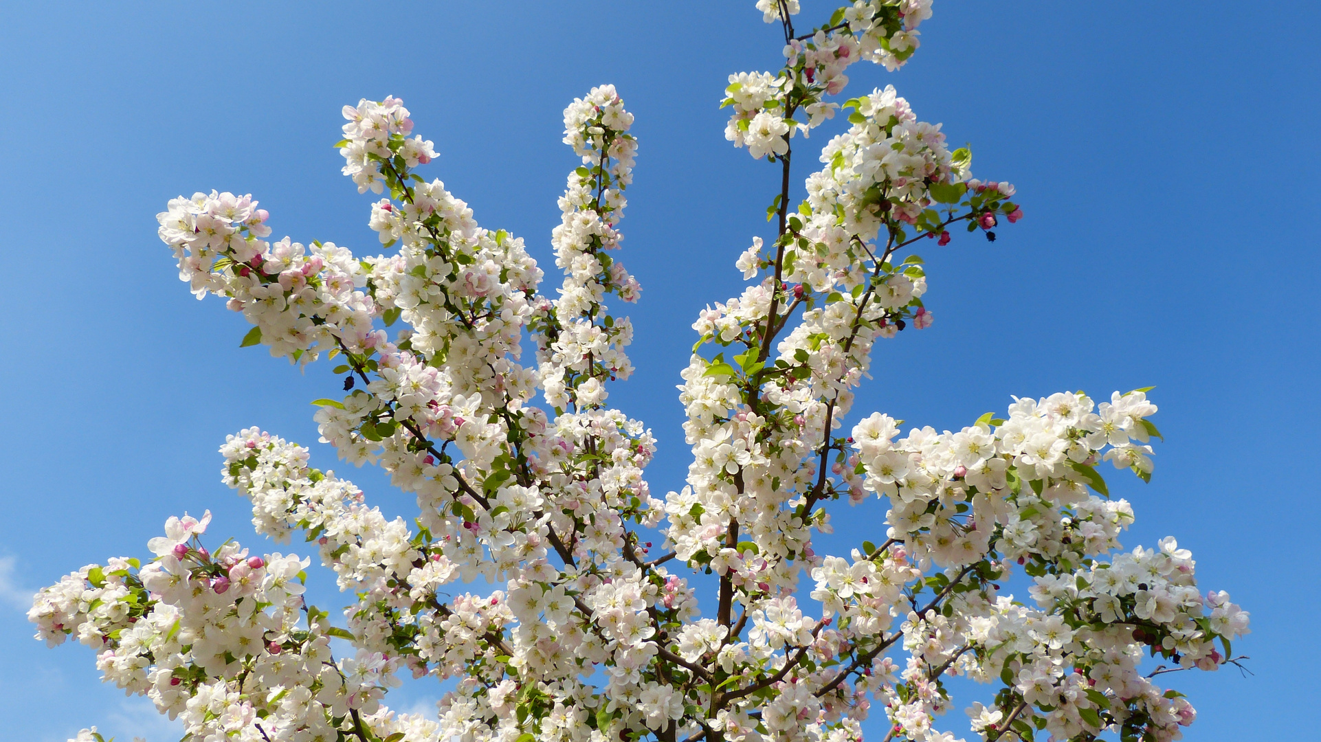 Baumblüten 7
