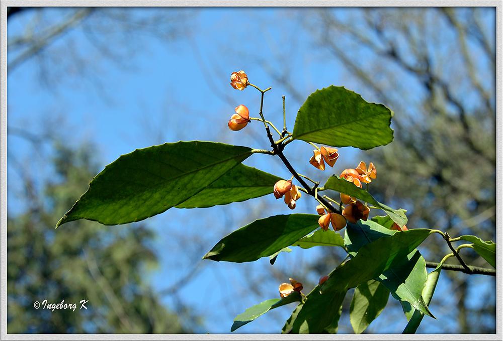 Baumblüten im Frühling