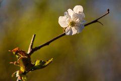 Baumblüten_022