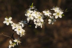 Baumblüten_045