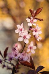 Baumblüten_058
