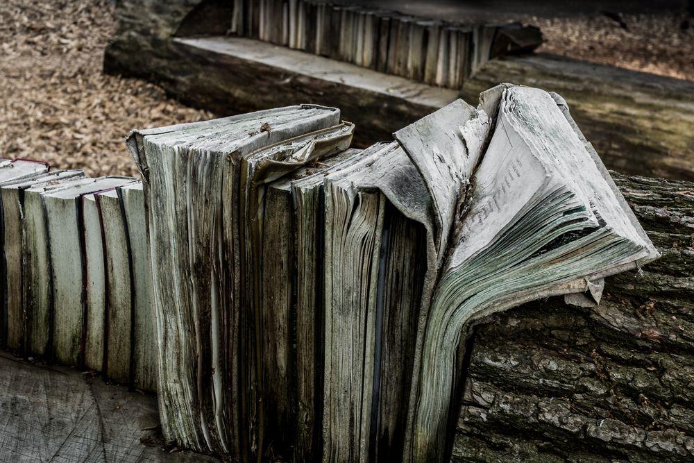 Baumbücher