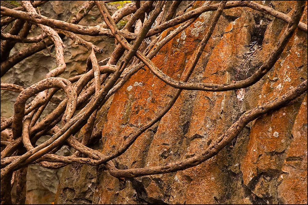 Baumeister Natur - Das Fehlen der Blätter