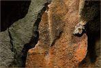 Baumeister Natur - Der Schlangenkopf
