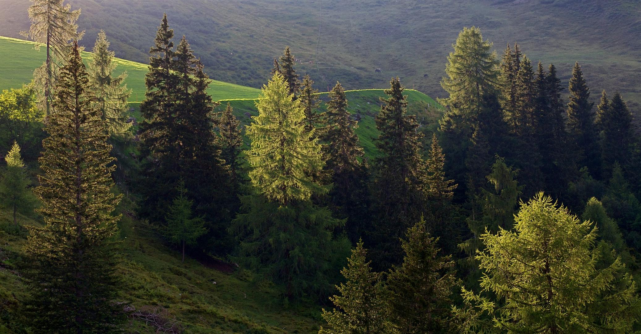 Baumgrenze