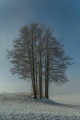 Baumgruppe