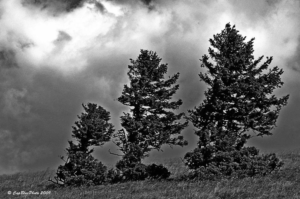 Baumgruppe am Feklberg